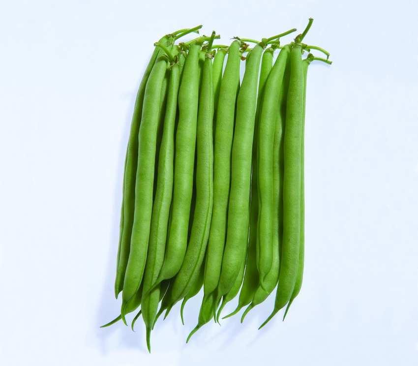 Bean Seed