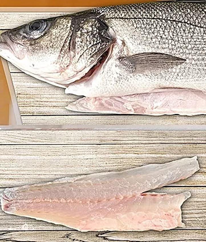 Fishark Sea bass Dicentrarchus Labrax