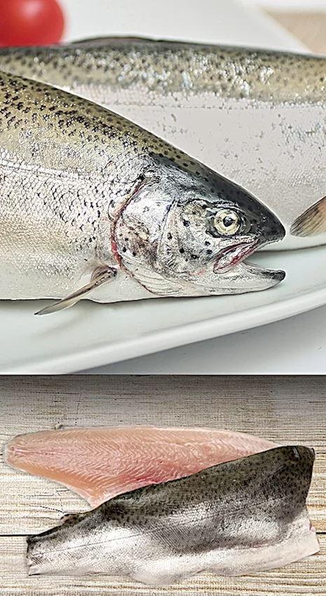 Fishark Trout Oncorhynchus mykiss