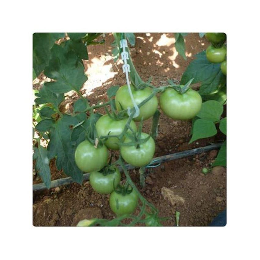 Garden Natura Agriculture Cluster Hook