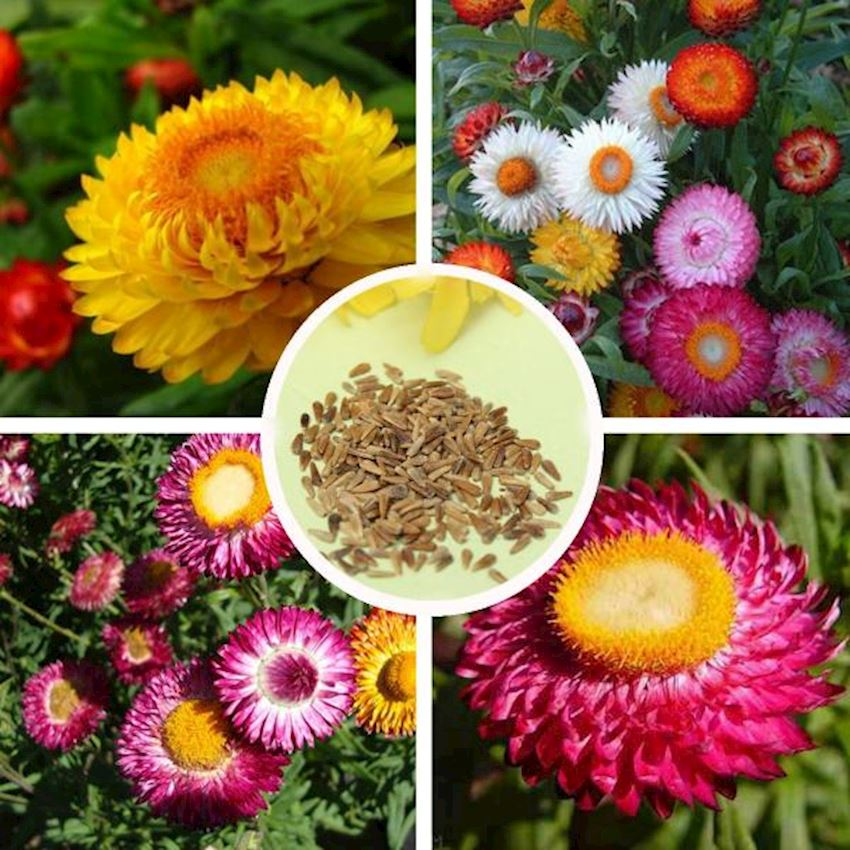 Garden Natura Agriculture Flower Seed