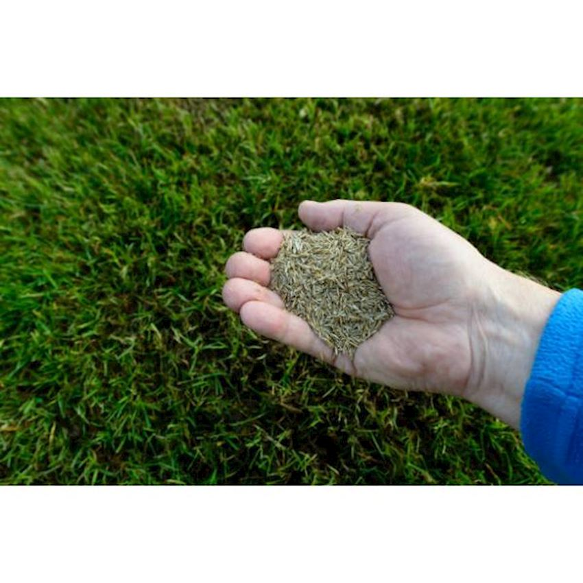 Garden Natura Agriculture Grass Seed