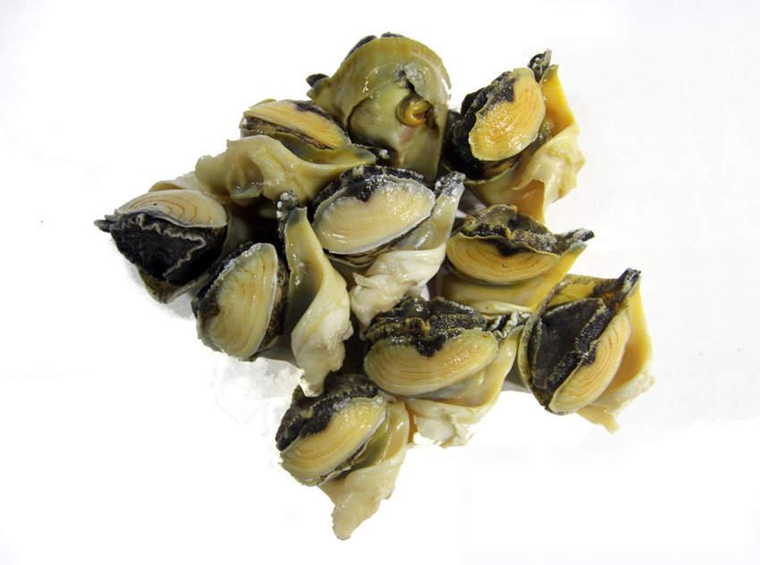 Sea Snail( Rapana venosa )