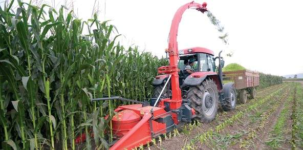 TWO ROW INDEPENDENT CORN SILAGE MAK. (1.25 m.)